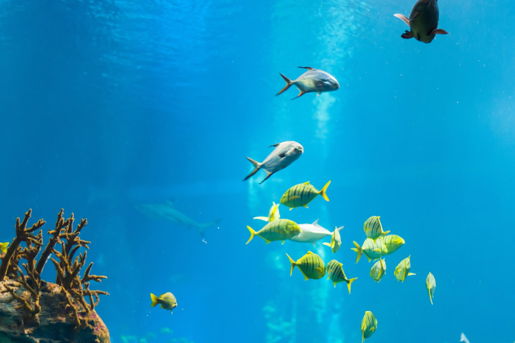 Zoo - vasca pesci